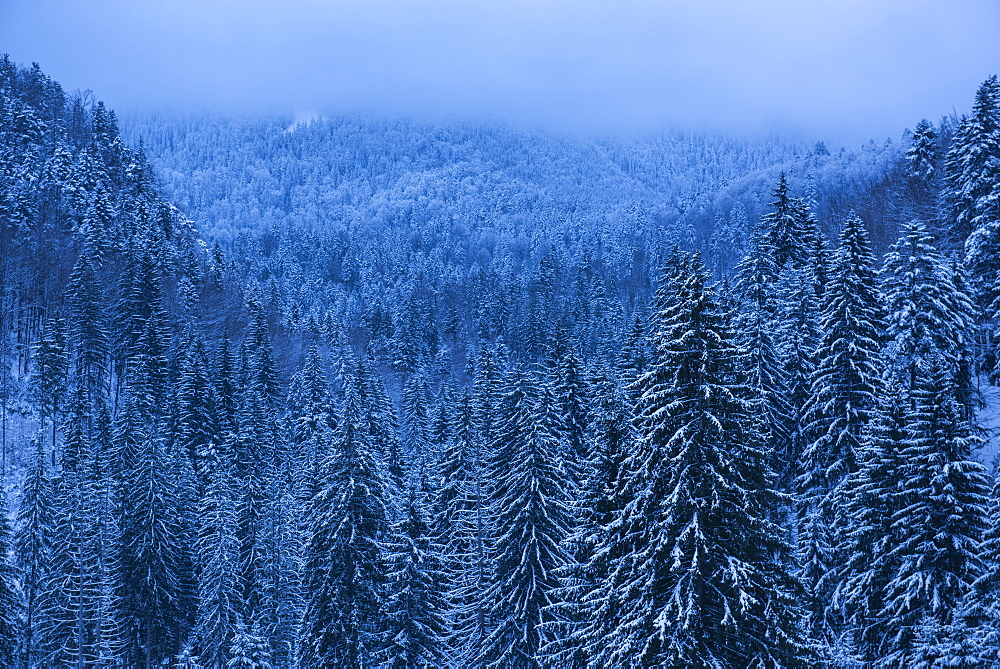 Winter landscapes of Carpathian Mountains near Brasov, Brasov County, Romania