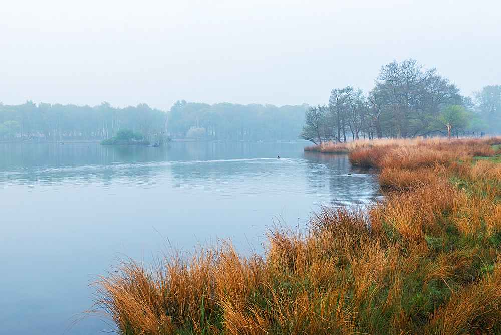 Pen Ponds in Richmond Park at sunrise, London, England, United Kingdom, Europe