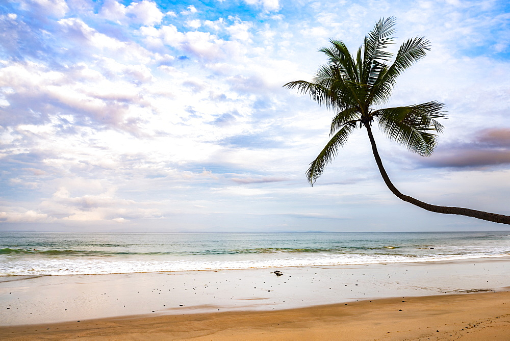 Palm tree at sunrise on Punta Leona Beach, Puntarenas Province, Pacific Coast of Costa Rica