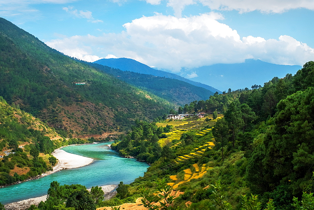 Punakha landscape edged by Pho Chhu River and the Himalayas, Punakha, Bhutan, Asia