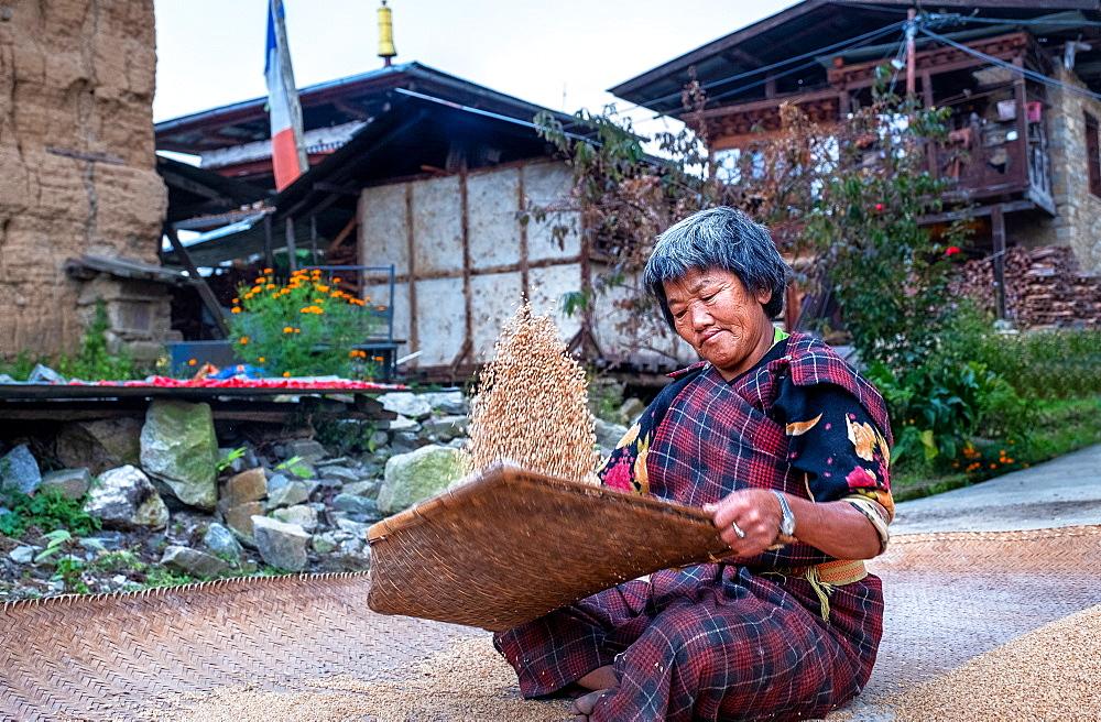 Traditional rice sifting at Tshangkha Village, near Trongsa, Bhutan, Asia - 1111-153