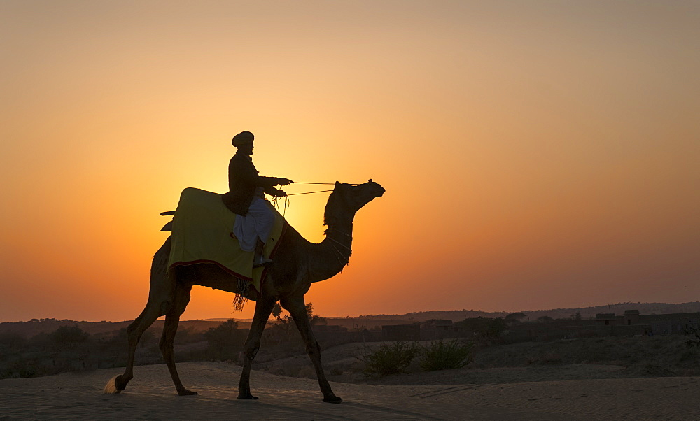 Man riding camel at sunset in Thar Desert, India, Asia - 1111-73