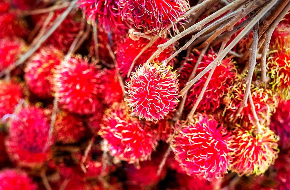 Fresh rambutan fruit sold at market in Togian Islands, Indonesia, Southeast Asia, Asia - 1111-88
