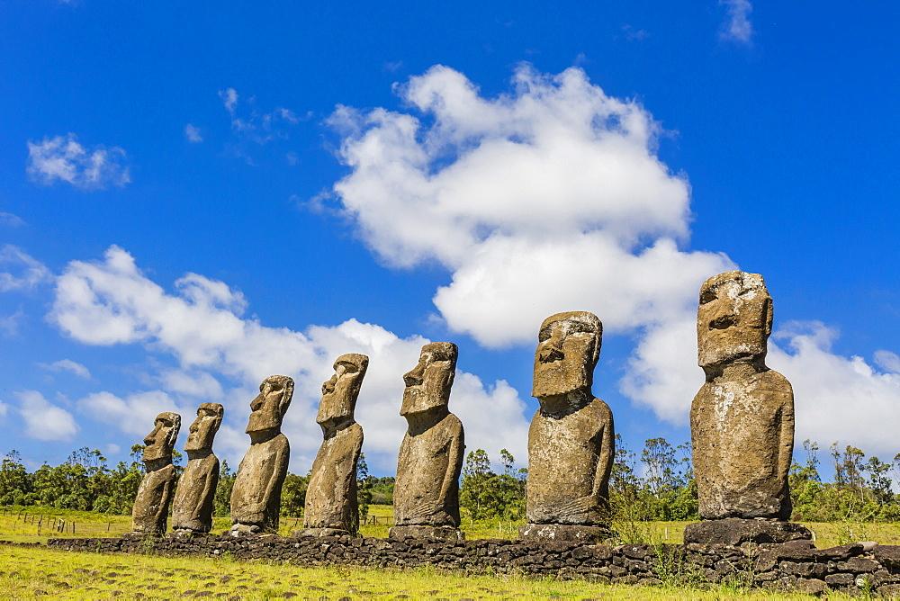 Seven Moai at Ahu Akivi, the first restored altar on Easter Island (Isla de Pascua) (Rapa Nui), UNESCO World Heritage Site, Chile, South America