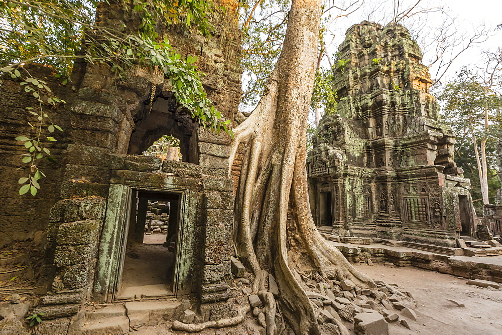 Ta Prohm Temple, being destroyed by jungle growth, Angkor, UNESCO World Heritage Site, Cambodia, Indochina, Southeast Asia, Asia