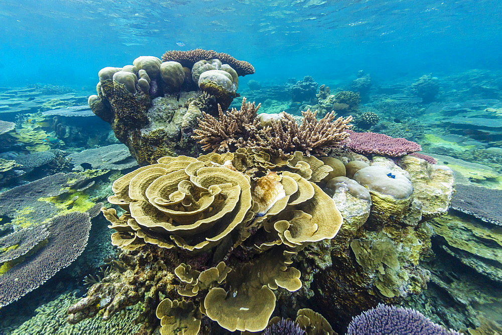 Underwater reef on a remote small Islet in the Badas Island Group off Borneo, Indonesia, Southeast Asia, Asia
