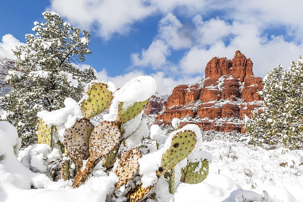 Bell Rock after a snow storm near Sedona, Arizona, United States of America, North America