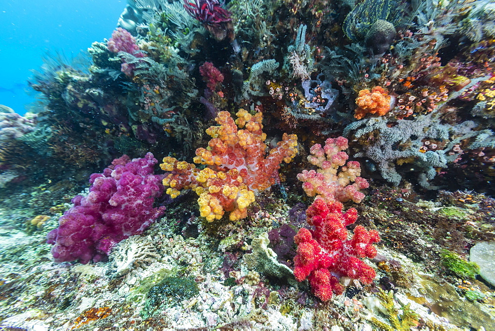 Profusion of hard and soft corals on Tengah Kecil Island, Komodo National Park, Flores Sea, Indonesia, Southeast Asia, Asia
