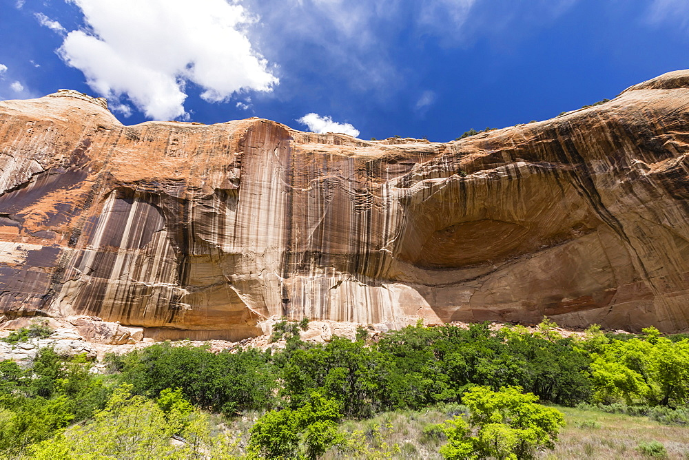 Navajo sandstone in Lower Calf Creek Falls Trail, Grand Staircase-Escalante National Monument, Utah, USA. - 1112-3539
