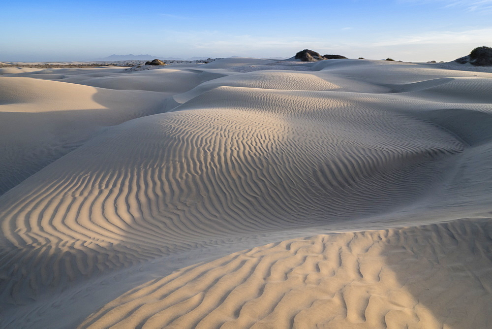 Patterns in the dunes at Sand Dollar Beach, Magdalena Island, Baja California Sur, Mexico.