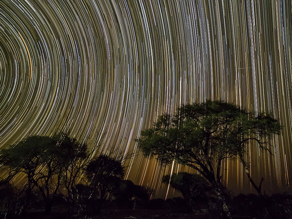The milky way over ace trees at night in the Okavango Delta, Botswana.
