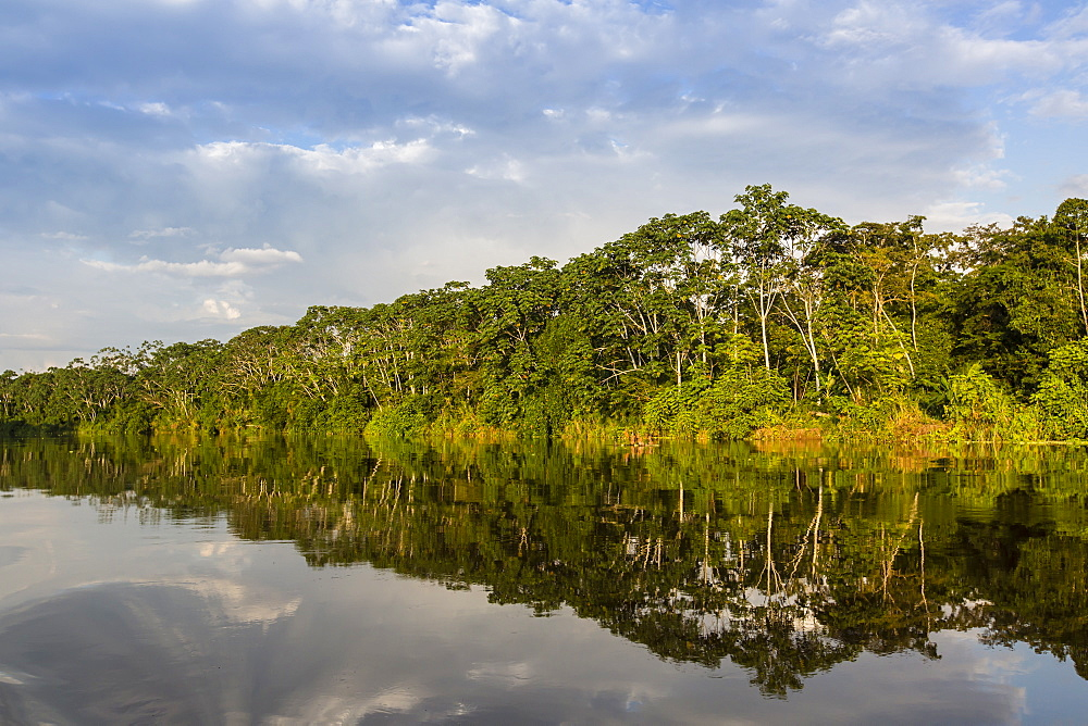 Reflections of the riverbank on Yanayacu Lake, Rio Pacaya, Pacaya-Samiria Reserve, Peru, South America