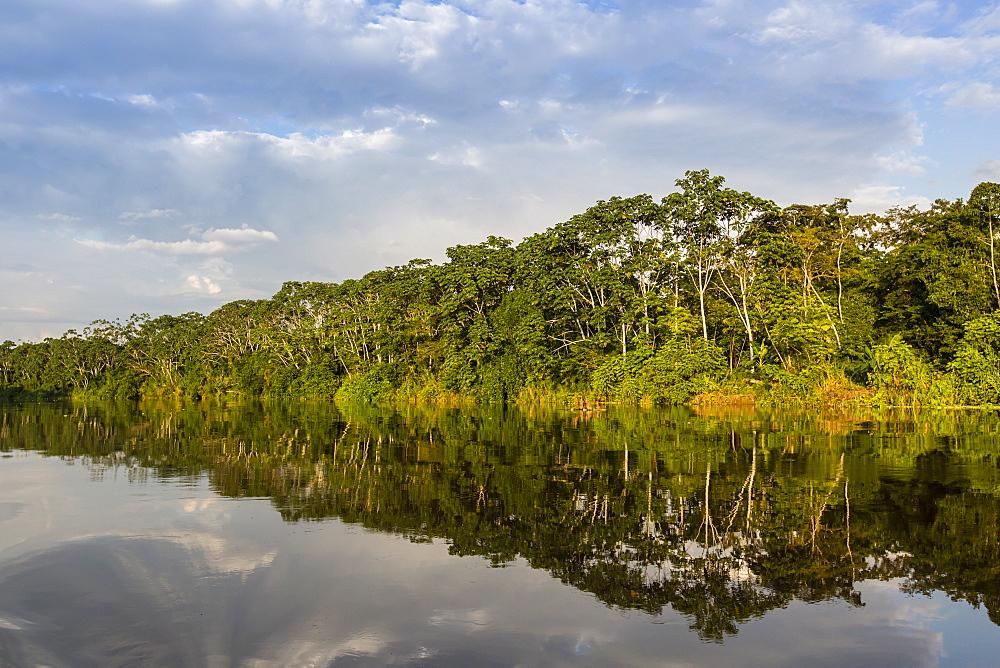 Reflections of the riverbank on Yanayacu Lake, Río Pacaya, Pacaya-Samiria Reserve, Peru.