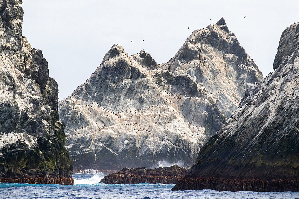 The remote islets known as Shag Rocks, South Georgia, UK Overseas Protectorate, Polar Regions - 1112-4598