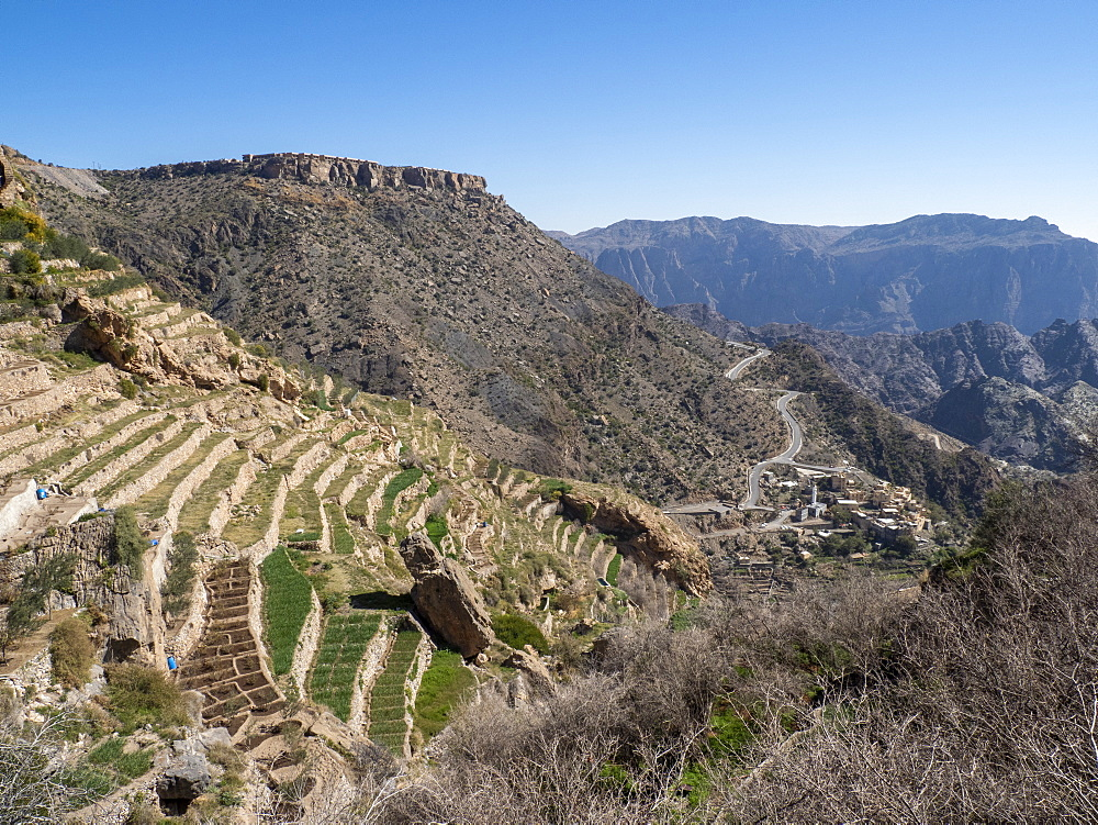 Terraced gardens line the cliffs near traditional villages of the Sayq Plateau, Sultanate of Oman, Middle East