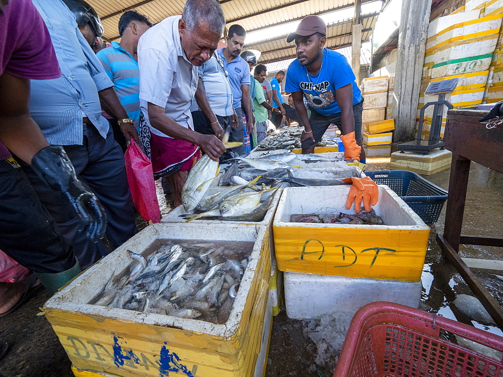 Vendors display and sell their catch at the Negombo fish market, Negombo, Sri Lanka, Asia