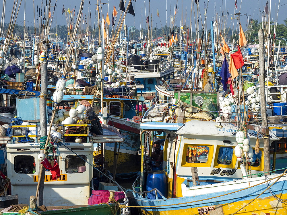 The fishing fleet at harbor near the Negombo fish market, Negombo, Sri Lanka, Asia