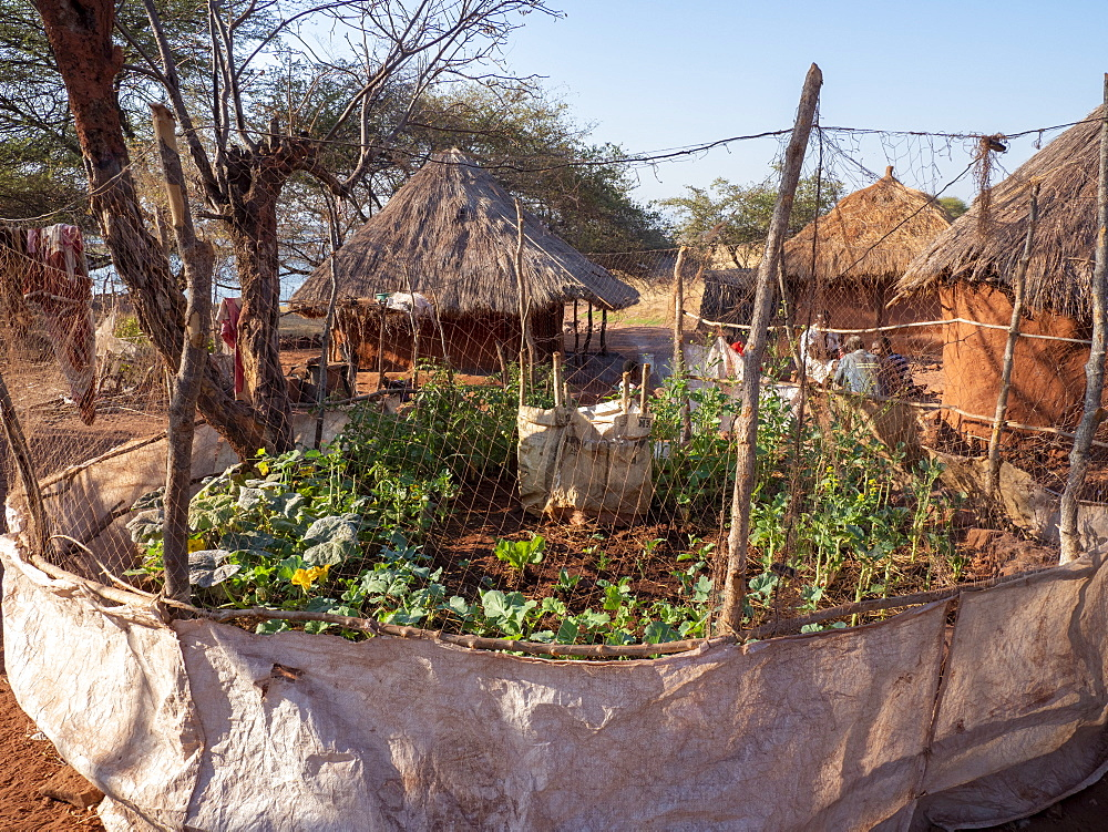 A vegetable garden in the fishing village of Musamba, on the shoreline of Lake Kariba, Zimbabwe.
