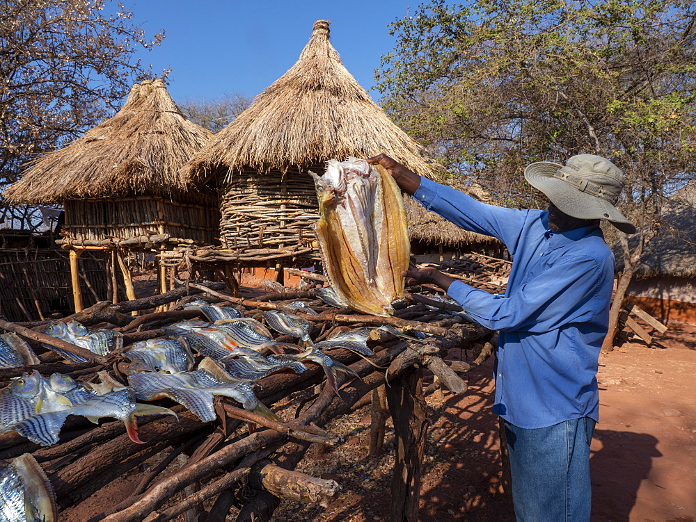 The days catch of fish drying in the sun in the fishing village of Musamba, on the shoreline of Lake Kariba, Zimbabwe, Africa - 1112-4984