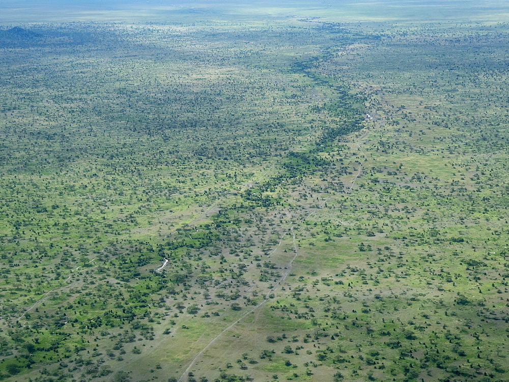 Aerial view of water course on the Serengeti Plains, Serengeti National Park, Tanzania, Africa.