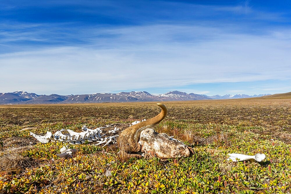 Mackenzie Bugt, Myggbukta, Greenland, Polar Regions - 1112-5886