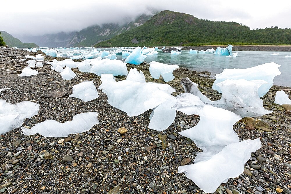 Glacial ice stranded on the beach at low tide in the East arm of Glacier Bay National Park, UNESCO World Heritage Site, Southeast Alaska, United States of America, North America - 1112-5908