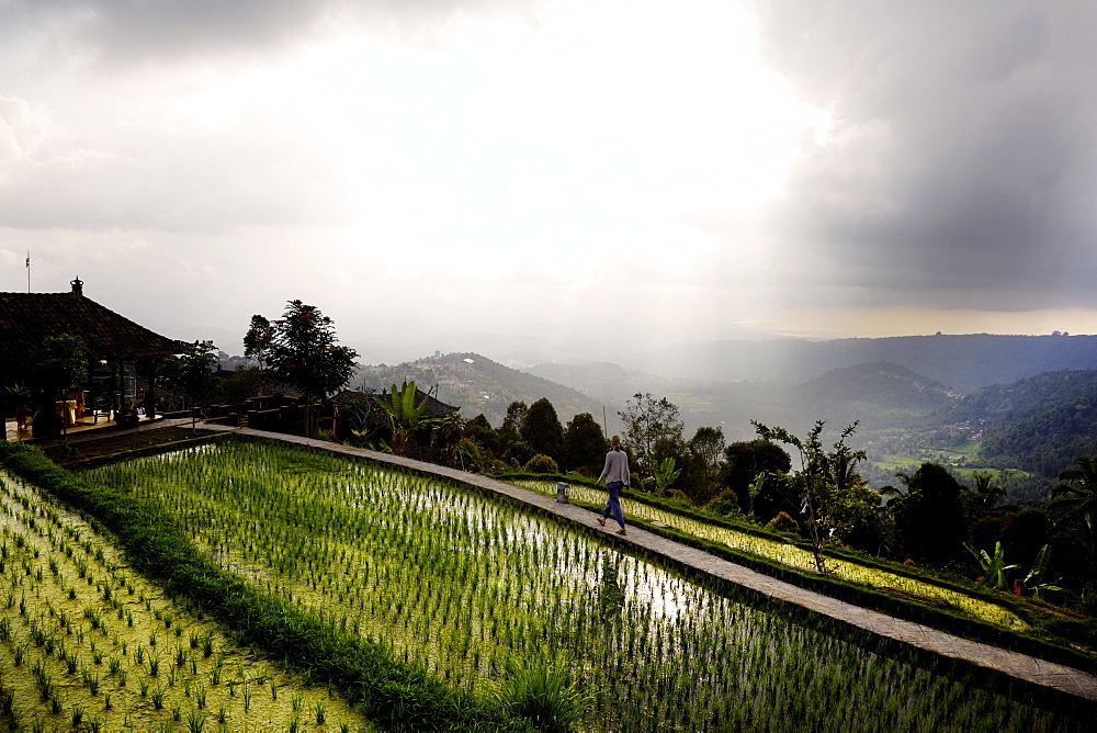 Woman passing rice terraces, Danau Tamblingan, Bali, Indonesia - 1113-104399