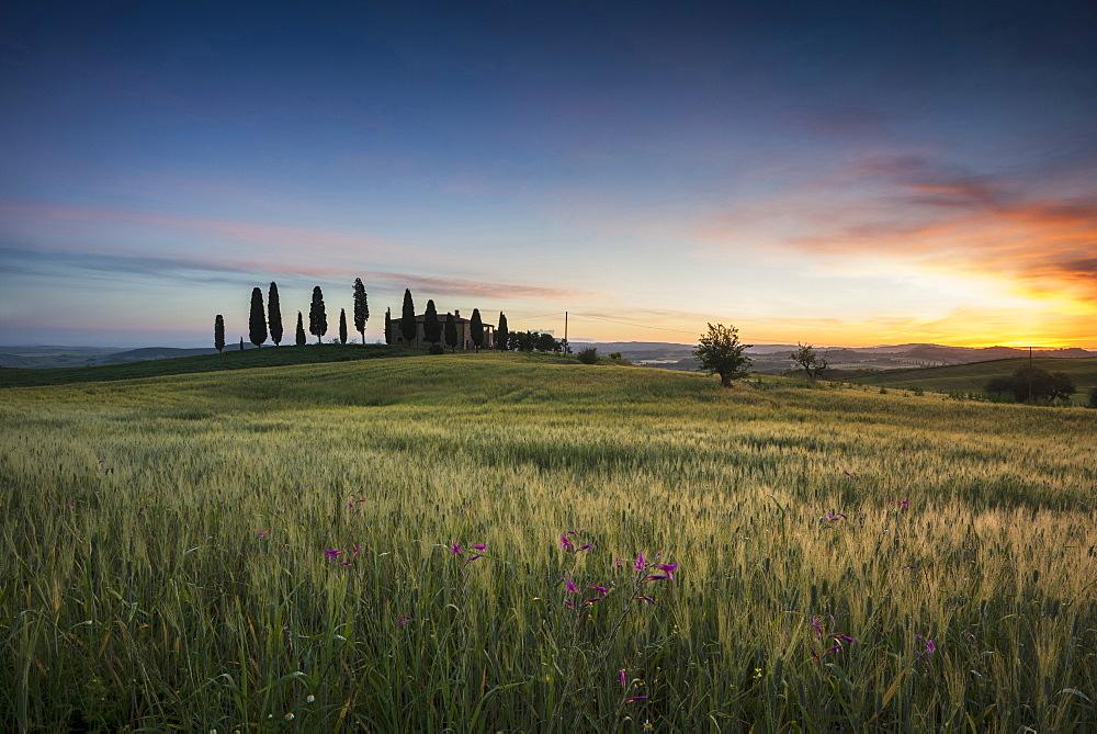 landscape near Pienza, Val d`Orcia, province of Siena, Tuscany, Italy, UNESCO World Heritage - 1113-104551