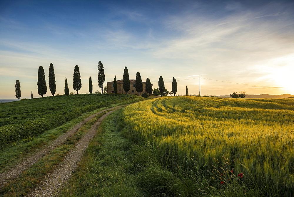 landscape near Pienza, Val d`Orcia, province of Siena, Tuscany, Italy, UNESCO World Heritage - 1113-104555