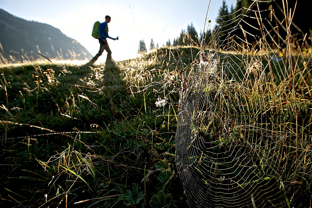 Spider's web on a meadow in front of an male hiker, Oberstdorf, Bavaria, Germany - 1113-104810