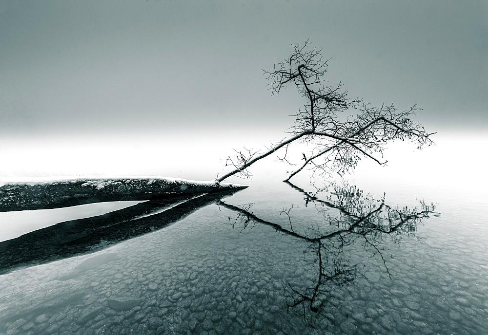Snow-covered fallen tree lying in the water, Lake Starnberg, Bavaria, Germany - 1113-105224