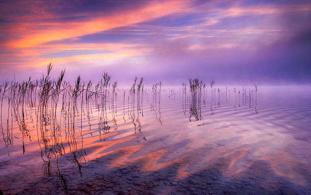 Reflecting clouds and reeds at sunrise on Lake Starnberg, Bavaria, Germany - 1113-105237