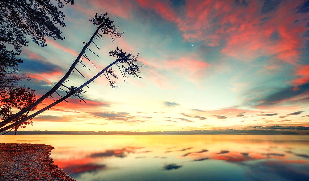 Sunrise with tree silhouettes on Lake Starnberg, Brahmspromenade, Tutzing, Bavaria, Germany - 1113-105253
