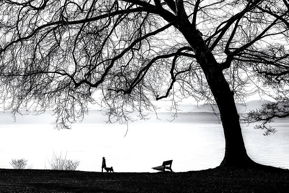 Tree silhouette on Lake Starnberg, Tuting, Bavaria, Germany, black and white - 1113-105339