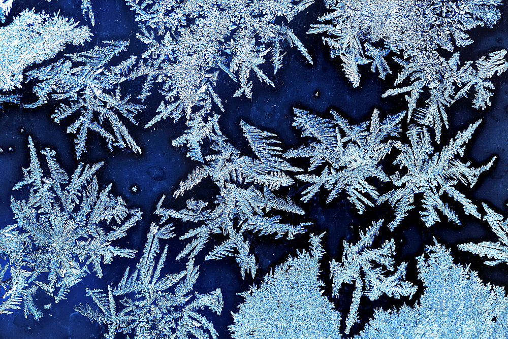 Extreme close-up of frost patterns on a window, Calgary, Alberta, Canada