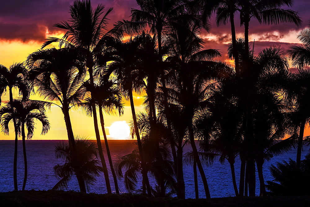 The setting sun through silhouetted palm trees, Wailea, Maui, Hawaii, United States of America