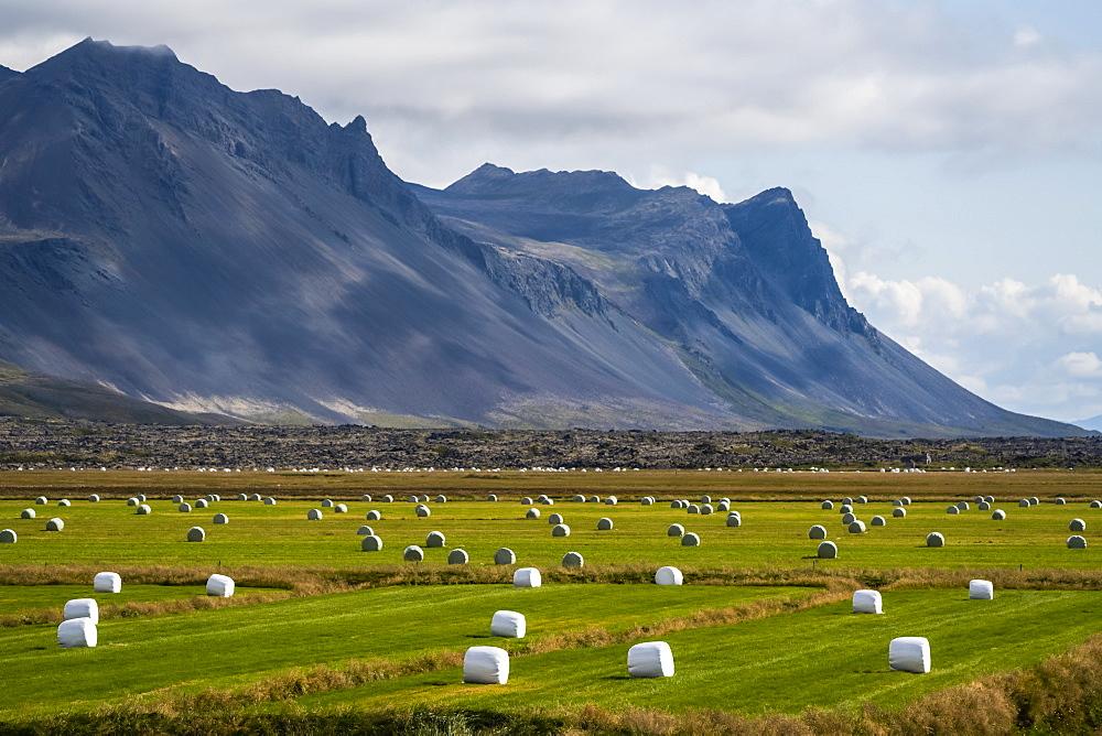 Hay bales dot a field along the coast of the Snaefellsness Peninsula, Iceland