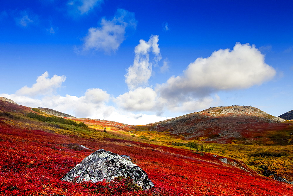 Autumn colours on the tundra, Kesugi Ridge, Denali State Park, Alaska, United States of America