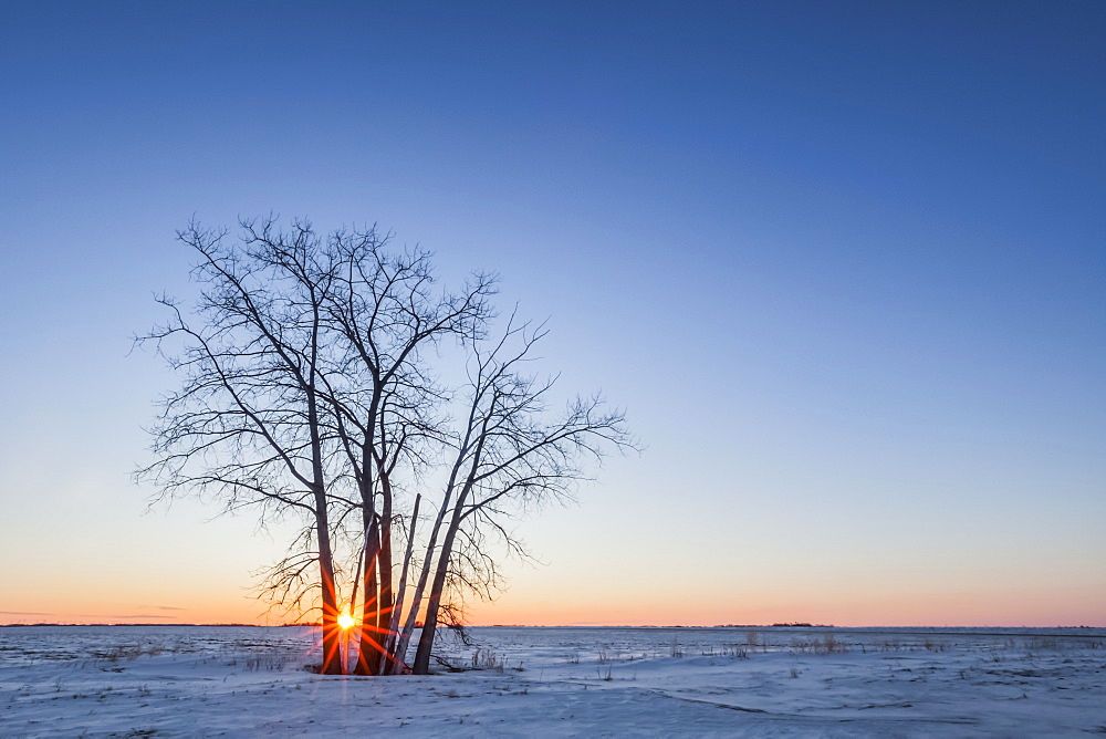 Lone tree at sunset over the prairies, near Winnipeg, Manitoba, Canada