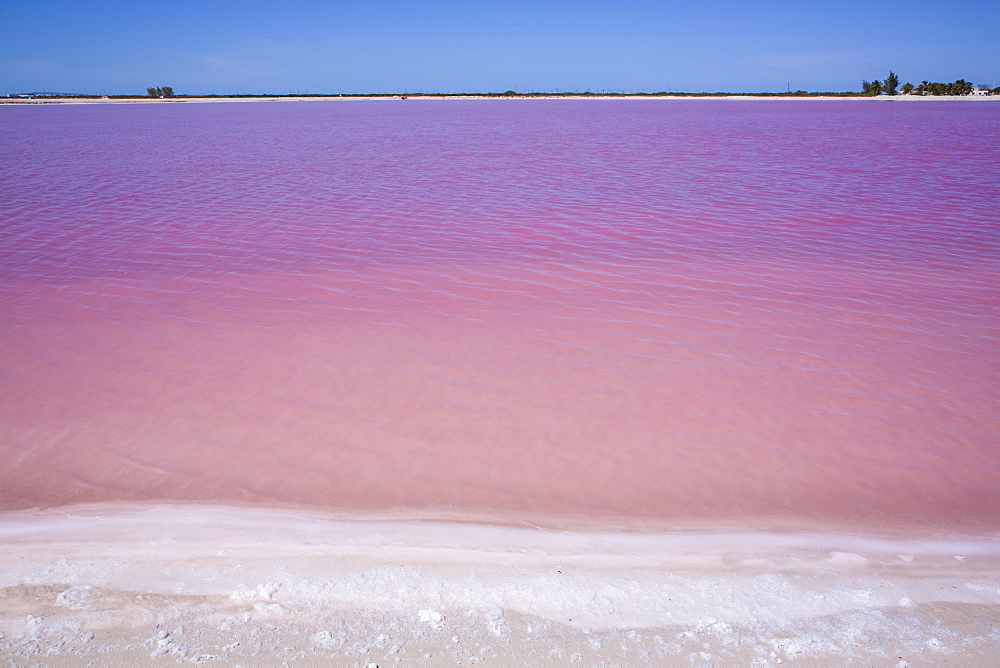 Pink Lake, Las Coloradas, Yucatan, Mexico