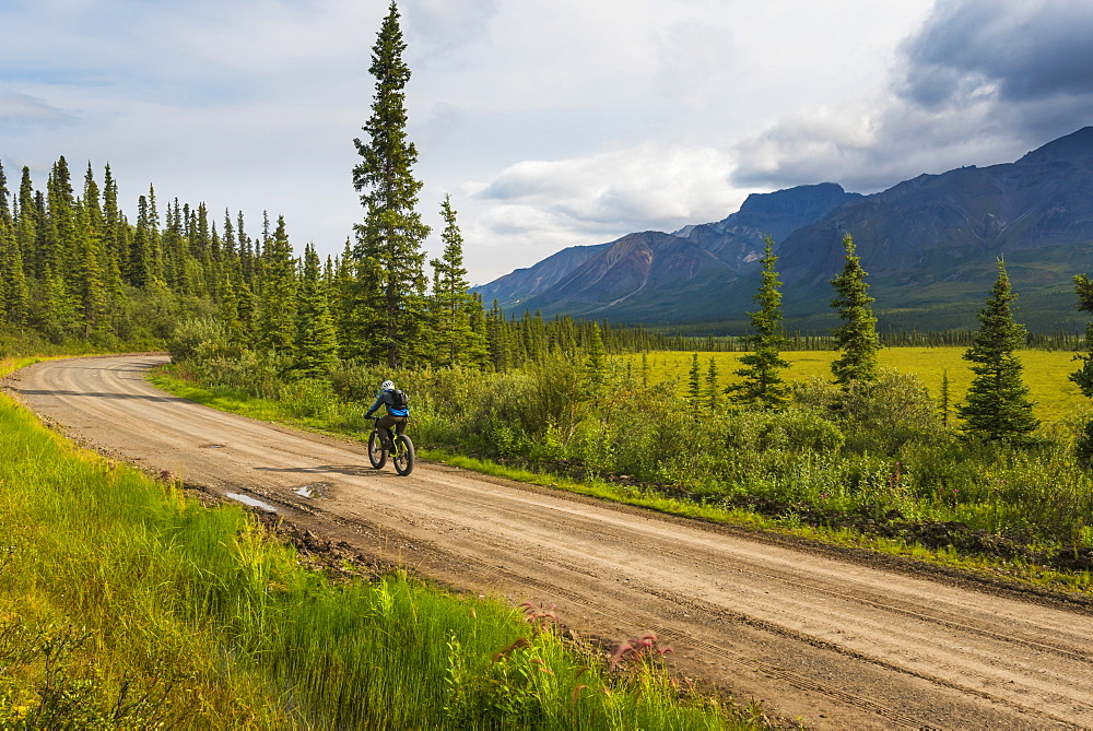 A man fat biking on the Nabesna Road in Wrangell-St. Elias National Park and Preserve on a cloudy summer day in South-central Alaska, Alaska, United States of America