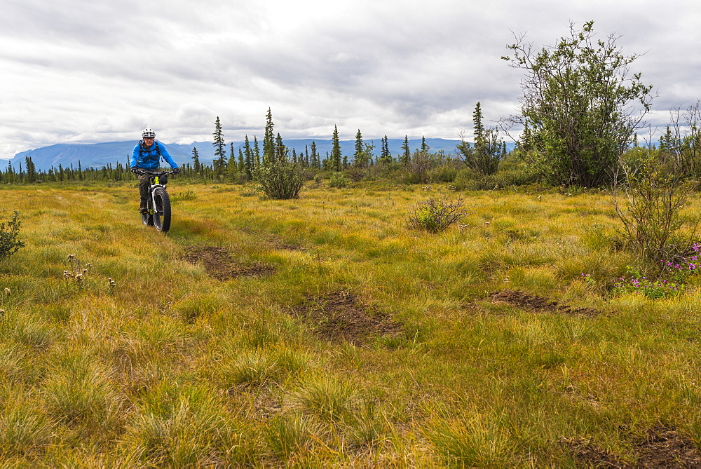 A man fat biking on a hunting trail in Wrangell-St. Elias National Park and Preserve on a cloudy summer day in South-central Alaska, Alaska, United States of America