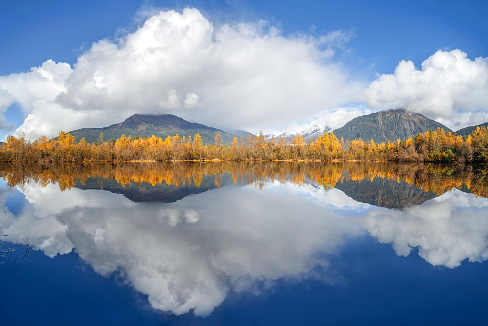 Mirror image of an autumn coloured forest and the Coast mountains in Tongass National Forest, Alaska, United States of America