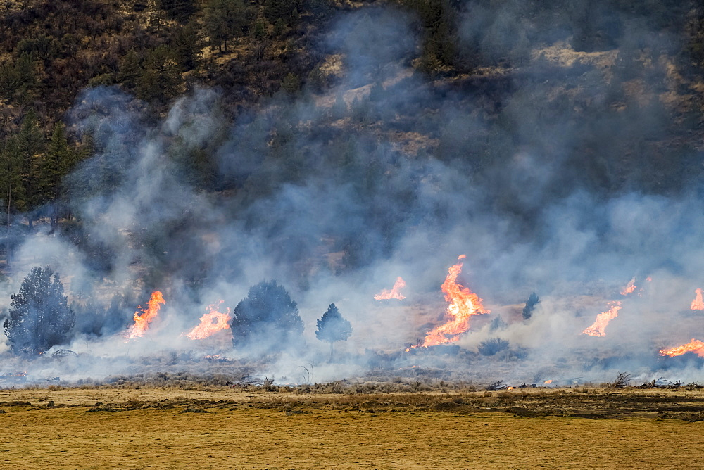 Flames of a prescribed burn, Olene, Oregon, United States of America