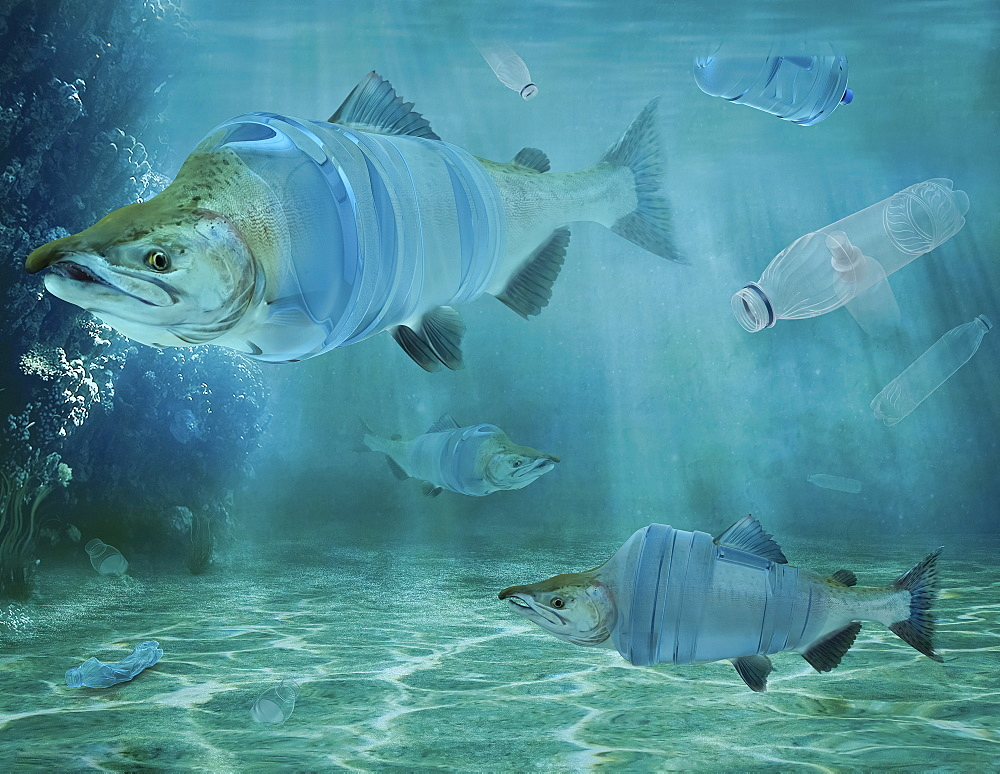 Fish and plastic water bottles underwater, composite image