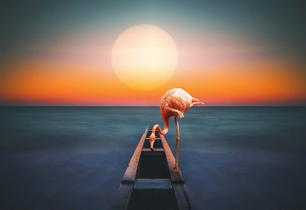 A flamingo stands on a structure leading out to the water with a glowing sun over the horizon, composite image