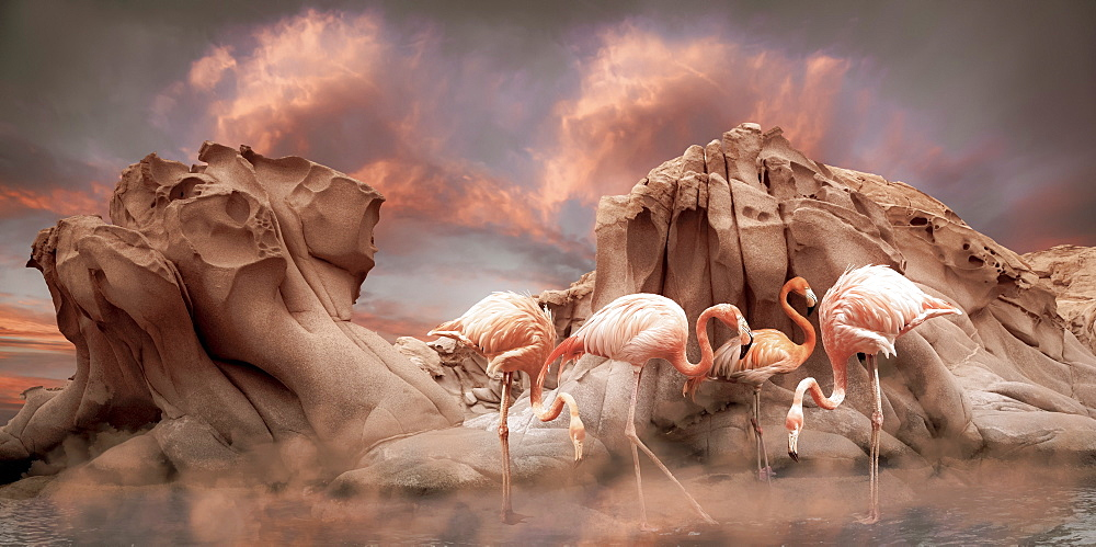 Pink flamingoes stand in shallow water in front of rugged rock formations with a dramatic sky of glowing pink clouds and mist hovering over the water, composite image
