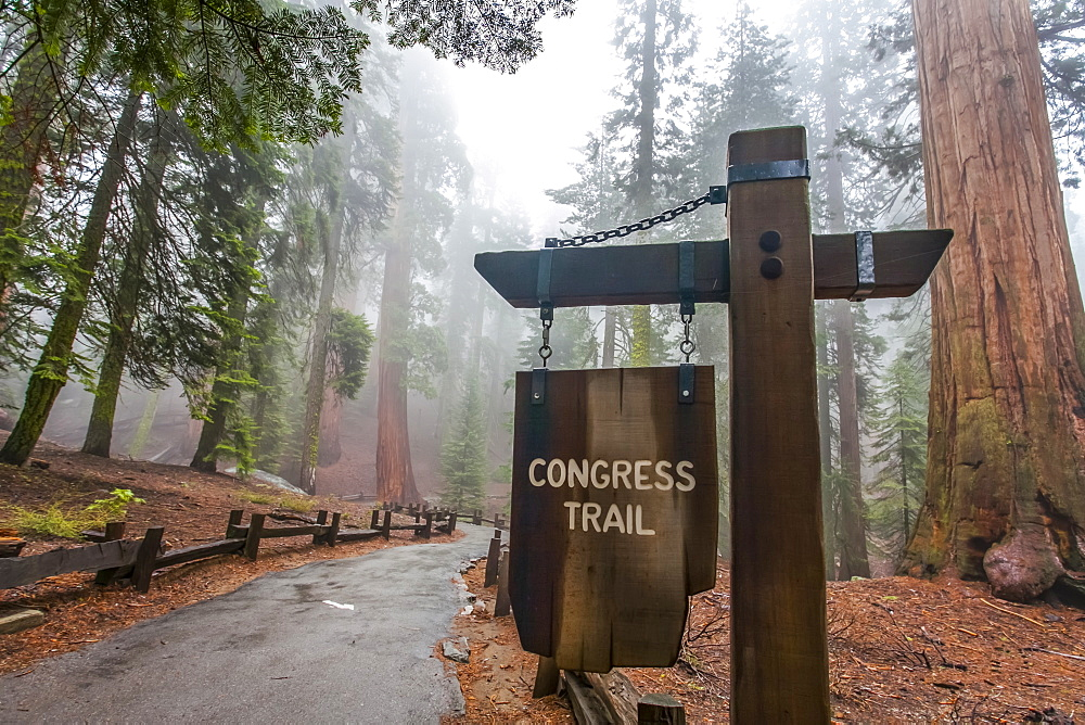 Congress Trail toward General Sherman, Sequoia National Park, Visalia, California, United States of America