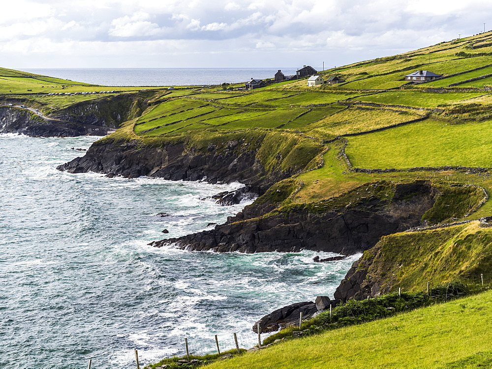 Lush,bright green grass in farm fields along the rugged coastline of County Kerry, Ballyferriter, County Kerry, Ireland