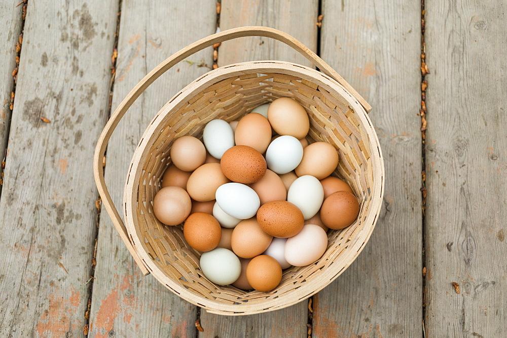 A basket of fresh eggs, Salmon Arm, British Columbia, Canada